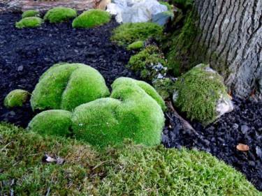 I Gunillas trädgård har mossan fått en fristad!