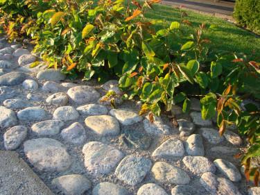 Markduk under stenen håller ogräset borta.