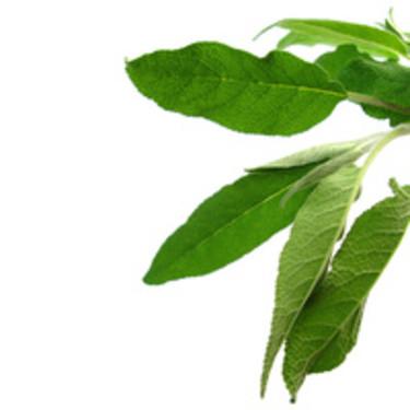 **Salvia**, _Salvia officinalis_