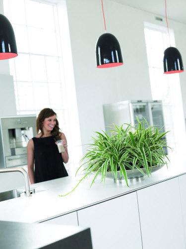 Allt tyder på att växter kommer att få en renässans i våra bostäder.