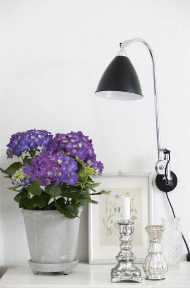 Vackra hortensia är en populär växt i såväl våra hem som i våra trädgårdar. Foto: Floradania