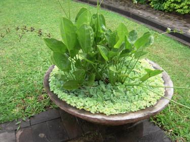 Enkel men vacker plantering i ett kärl.