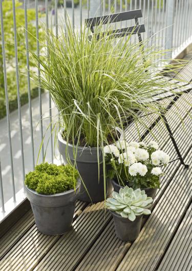 Skapa en grupp med växter i olika höjder, det går att göra utan att ta alltför mycket av balkongens golv i anspråk.  Foto: Floradania