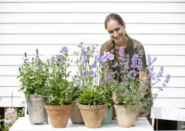Danska trädgårdsbokförfattaren Signe Wenneberg ger oss sina bästa tips för sensommarträdgården. Foto: Floradania
