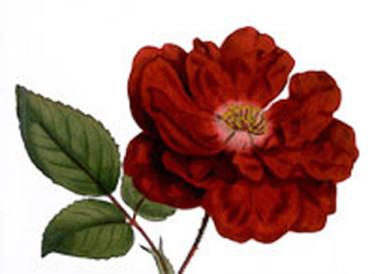 SKUD-blomma