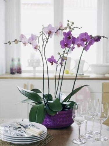 Stilrent.  Foto: Flower Council of Holland.