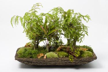 Att skapa en trivsam miljö för dina rumsväxter behöver inte vara riktigt så här avancerat.  Foto: Floradania