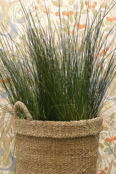 _Juncus_ 'Pencil Grass'. Foto: Mats Hallgren.