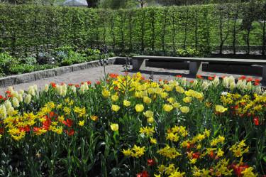 Närbild på några av lökväxterna. Foto: Sylvia Svensson