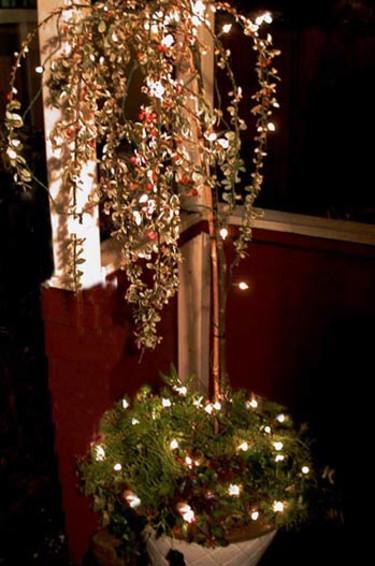 Julträd med ljus.