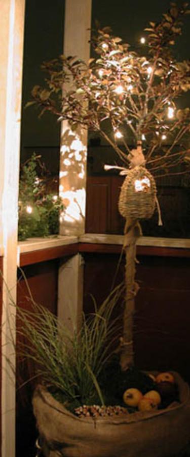 Vill du inte ha ditt julträd inomhus.
