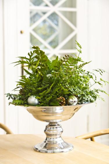 En silverskål på fot kan bli en vacker bas för ett grönt jularrangemang.  Foto: Floradania