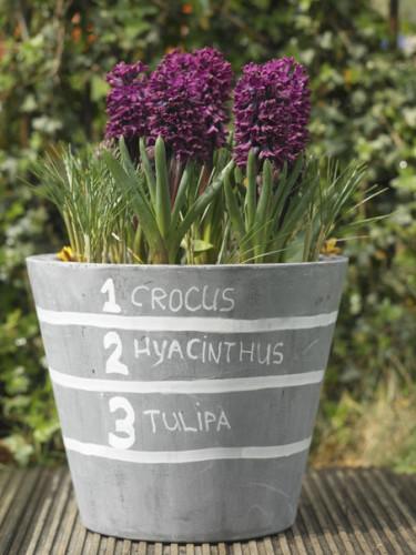 Inne på andra blomningen i en lasagneplantering.  Foto: Blomsterfrämjandet/IBC