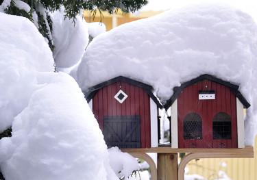 Kanske får vi snö lite längre fram! Se då till att fåglarna inte saknar mat! Arr + foto: Sylvia Svensson