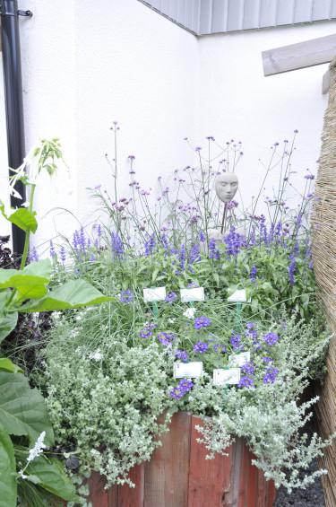 Höstväxter. Foto: Sylvia Svensson