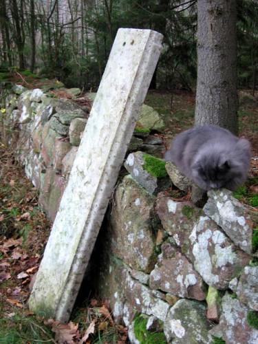 Stenfynd i väntan på att få bli bänk, sällskapat av katten Foxie.