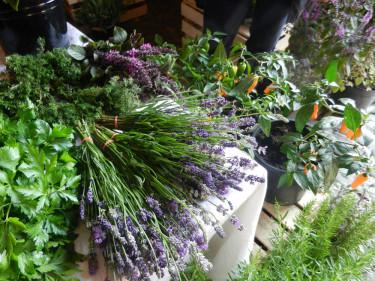 Chili, lavendel, persilja och andra kryddor från Källdalens Trädgårdar. Foto: Susanne Lundberg