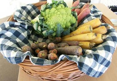 Skördandet av grönsaker är intensivt.