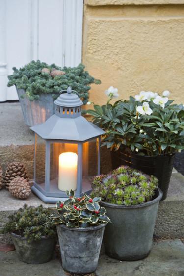 Arrangemang med växter och lykta är oerhört vackert. Foto: Floradania