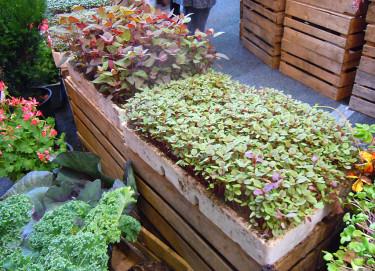 Vackra småplantor.  Foto: Sylvia Svensson