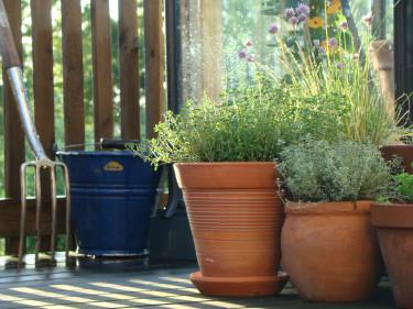 Välj en blandning av kryddor som passar dig till balkong eller terrass. Här syns citrontimjan, backtimjan och blommande gräslök. Foto: Katarina Kihlberg