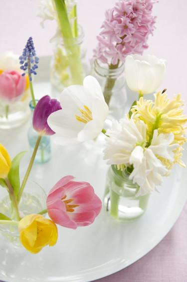 Bricka med tulpaner, pärlhyacint och hyacinter. Foto: Blomsterfrämjandet