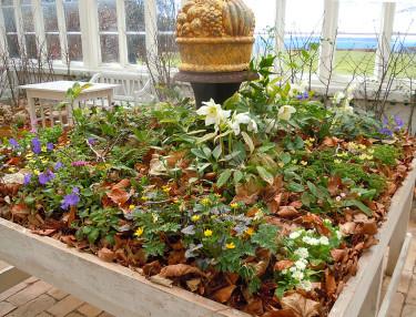 Utställningsbord med vårblommor. Foto: Sylvia Svensson