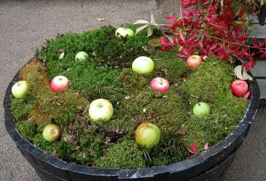 Mossa och äpplen till fåglarna Foto: Sylvia Svensson