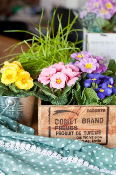 Primula i trälåda är jättefint! Foto: Blomsterfrämjandet, Minna Mercke Schmidt