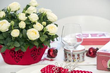 Julens vita rosor. Foto: Floradania