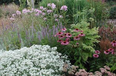 Basen utgörs av långblommare som den vita pärleternellen i kanten, _Achillea ptarmica_ 'The Pearl'. Den blommar från början av juli till långt in på hösten.
