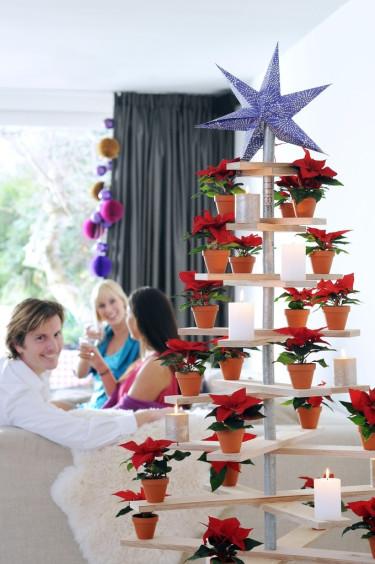 Julstjärnor som modern gran Foto: Blomsterfrämjandet