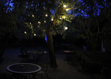Belyst silverpil i Apotekarns trädgård i Simrishamn. Foto: Sylvia Svensson
