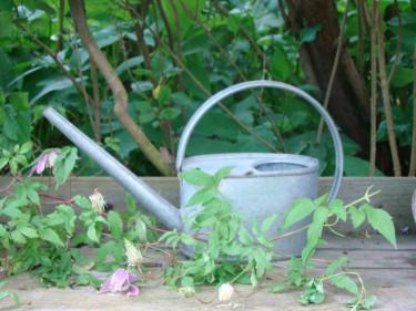 Växterna & tingen kan vara så mycket. Endast fantasin begränsar...