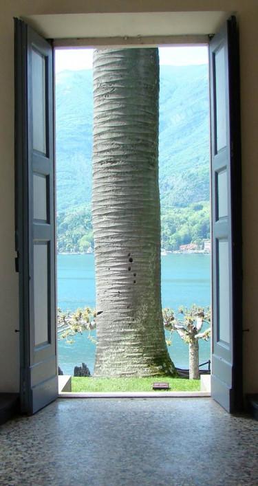 Sjön där bakom stammen bjuder på en makalös utsikt.