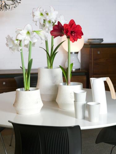 Arrangemang med röda och vita amaryllisFoto: Blomsterfrämjandet