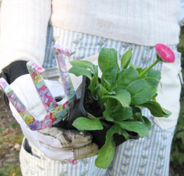 Söta tusenskönan, _Bellis perennis_, hör inte bara hemma i gräsmattan!  Foto: Blomsterfrämjandet.