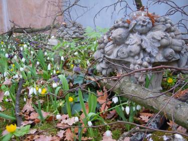 Vårlig lund Foto: Sylvia Svensson