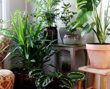 Gröna inomhusväxter! // Foto: Anna Theorin