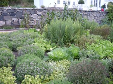 Potager med sallat, kål och kryddväxter mm. Foto: Sylvia Svensson