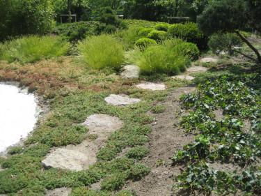 Trädgård med en naturlig stil som matchar omgivningarna. Foto: Karin Malmberg
