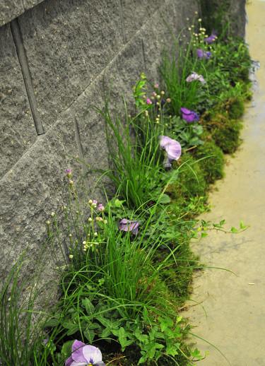 Arrangemang med penséer, strandtrift, murgröna, gräs och mossa Foto: Sylvia Svensson