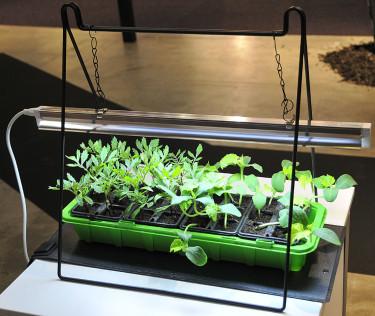 Enkel växtbelysning med upphängningsramp. Foto: Sylvia Svensson