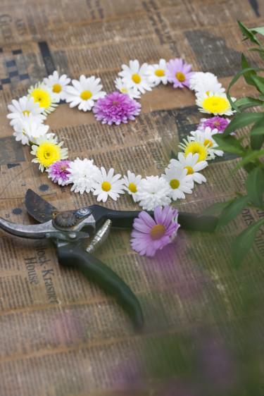 Buskmargerithjärta.  Foto: Blomsterfrämjandet/Anna Skoog