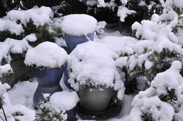 Funkiakrukor med mossmatta täckta av första snön. Man kan ösa på torra blad och granris sedan. Foto: Bernt Svensson Arr: Sylvia Svensson