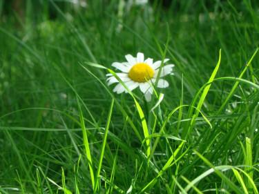 Sommarpyssla om din gräsmatta och ta vara på gräsklippet.  Foto: Katarina Kihlberg.
