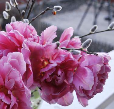 Dubbla tulpaner med videkissar. Foto och arr: Sylvia Svensson