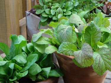 Odling i krukor och lådor är en utmärkt lösning när trädgården inte räcker till!  Foto Katarina Kihlberg