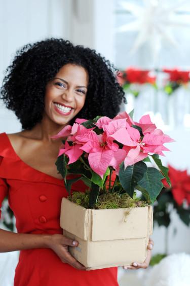 Foto: Blomsterfrämjandet