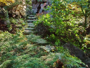 På en naturtomt, även kallad woodland, med sitt växelspel mellan sol och skugga, passar kryptujan utmärkt eftersom den är så anpassningsbar.